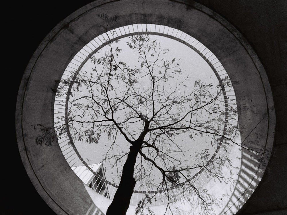 black and white photo of tree from below