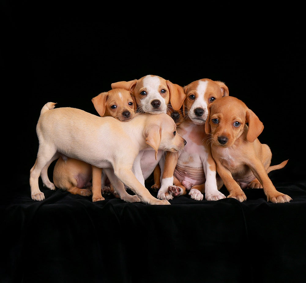 group of puppies