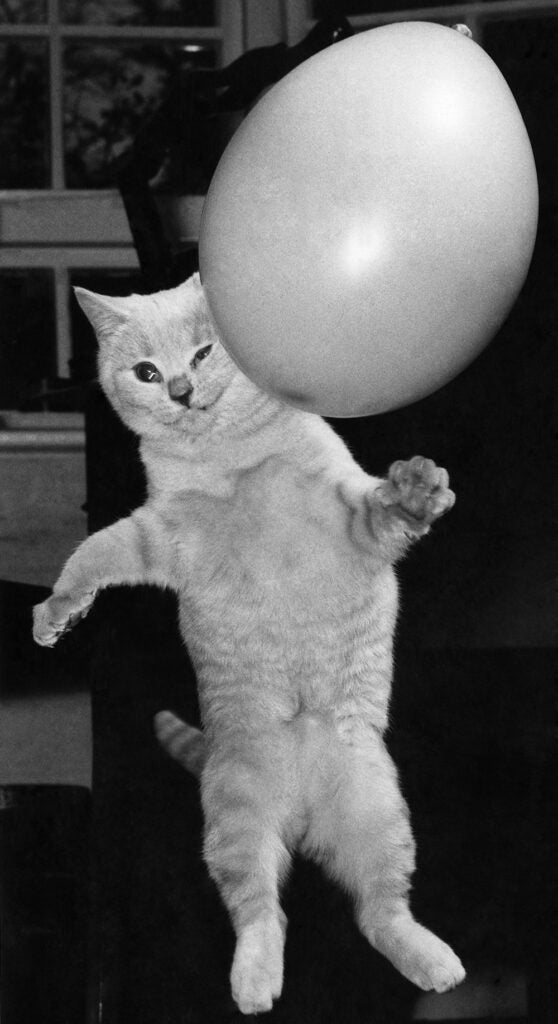cat with balloon