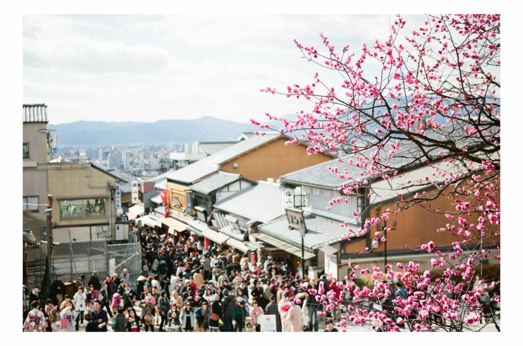 Japanese rooftops and cherry blossoms