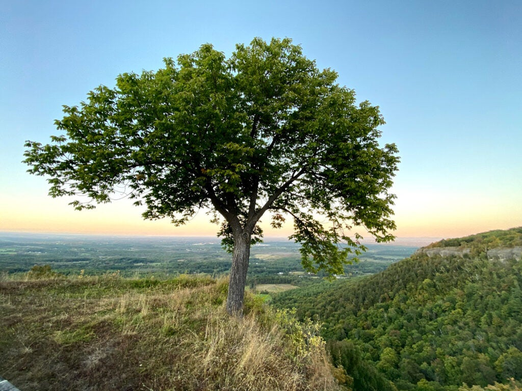 A tree on mountain at Thacher Park