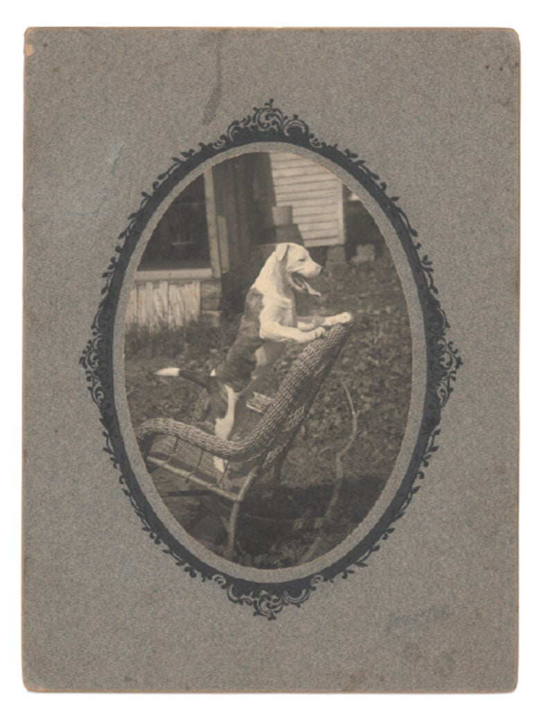 vintage photo of dog in decorative mat