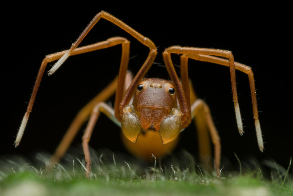 Close up of a crab spider
