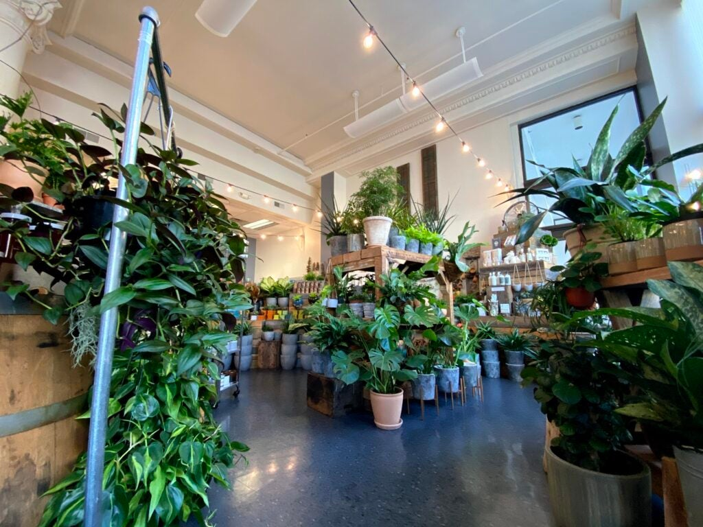 Super wide plant store example.