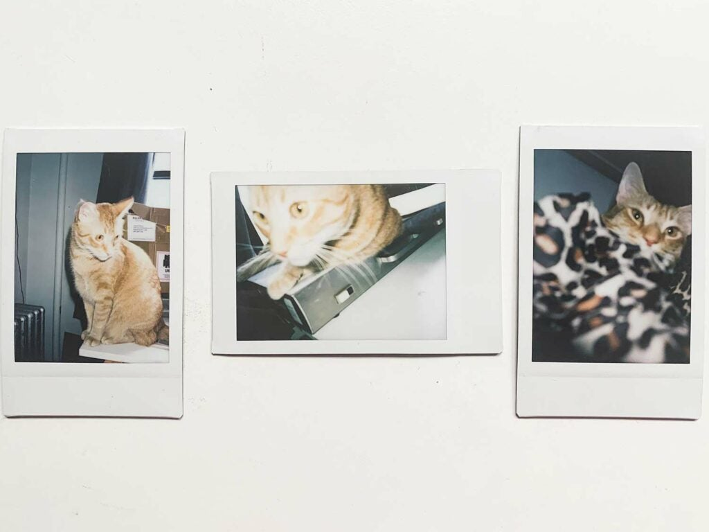 Sample cat portraits from the Instax Mini 11.